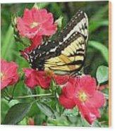 Backyard Beauty Wood Print