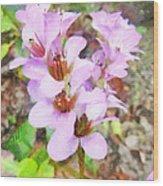 Backyard Blooms Wood Print