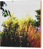 Backyard Hues Wood Print