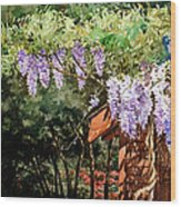 Backyard Wisteria Wood Print by Peter Sit