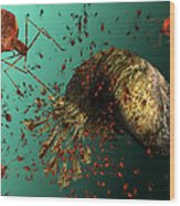 Bacteriophage Viruses Wood Print by Karsten Schneider