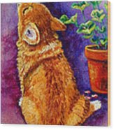Bad Puppy In Mom's Geranium Wood Print