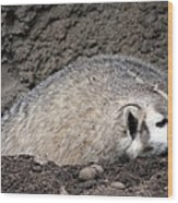 Badger - 0015 Wood Print