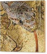 Bairds Rat Snake Tongue Flick Wood Print