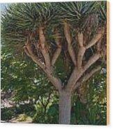 Balboa Park San Diego Wood Print