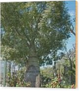 Balboa Tree Wood Print