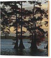 Bald Cypress Trees Growing Wood Print