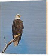 Bald Eagle - Symbol Of Justice Wood Print