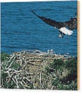 Bald Eagle And Chicks Wood Print