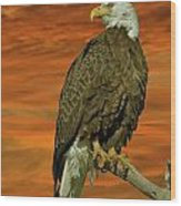 Bald Eagle At Sunrise Wood Print