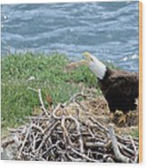 Bald Eagle Calling Wood Print