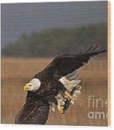 Bald Eagle Catches Fish Wood Print