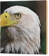 Bald Eagle Close Up Wood Print