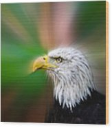 Bald Eagle Color  Wood Print