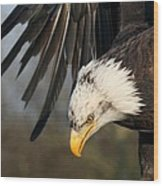 Bald Eagle Diving Wood Print