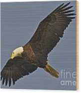 Bald Eagle Fly Over Wood Print