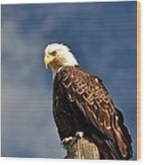 Bald Eagle Homer Alaska Wood Print