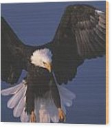 Bald Eagle Hovering In The Air Wood Print