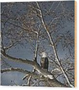 Bald Eagle In A Tree Wood Print by Con Tanasiuk