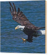 Bald Eagle On The Hunt Wood Print