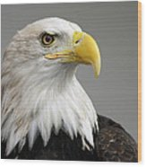 Bald Eagle Portrait Wood Print