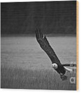 Bald Eagle Take Off Series 5 Of 8 Wood Print