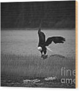 Bald Eagle Take Off Series 6 Of 8 Wood Print