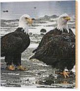 Bald Eagle Trio Wood Print
