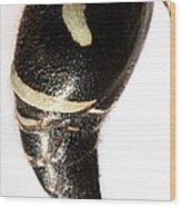 Bald-faced Hornet Stinger Wood Print