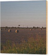 Bales In Peanut Field 1 Wood Print