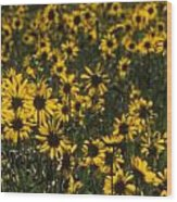 Balsamroot Field In Grand Teton Wood Print