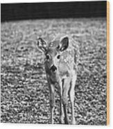 Bambi In Black And White Wood Print