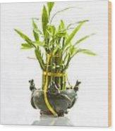 Bamboo In Hi-key Wood Print