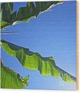 Banana Leaf In The Sky Wood Print