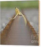 Banana Peel On The Railroad Tracks Wood Print