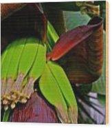 Banana Plant I Wood Print
