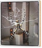 Banana Spider Wood Print