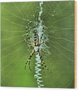 Banana Spider With Web Wood Print