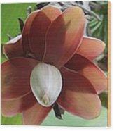 Banana Tree Blossom Wood Print