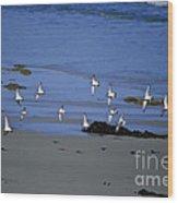 Band Of Seagulls Wood Print