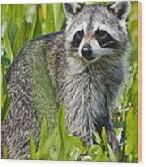 Bandit Wood Print