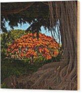 Banyan And Poinciana Trees Wood Print