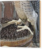 Barbary Falcon Feet Wood Print