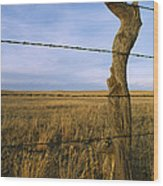 Barbed Wire Fence Along Dry Creek Road Wood Print