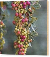 Barberry (berberis Sp.) Wood Print