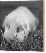 Barbie Guinea Pig Wood Print