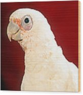 Bare Eyed Cockatoo Wood Print