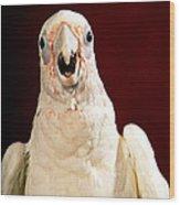 Bare Eyed Cockatoo Speaks Wood Print