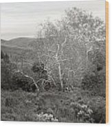 Bare Garden In The Hills Wood Print