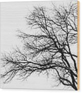 Bare Tree Silhouette Wood Print